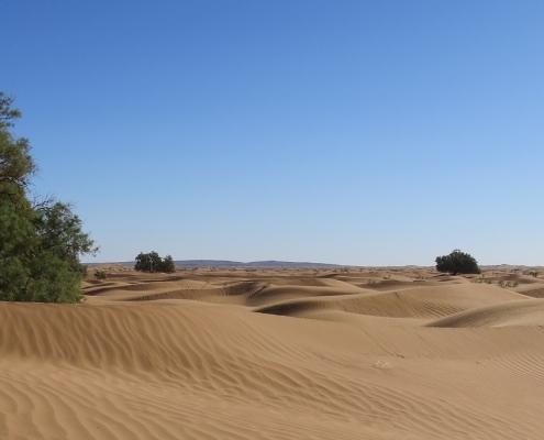 investissement durable desert timber africa